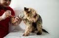 Собака боится стричь когти: что делать?