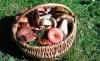 Собрать грибы и не отравиться: что должен знать каждый грибник